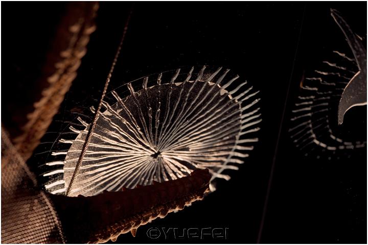 【相机人生】鲜为人知的故事 — 玻璃艺术展中的趣事(331)_图1-30