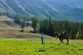 大美新疆——喀纳斯,心中的遗