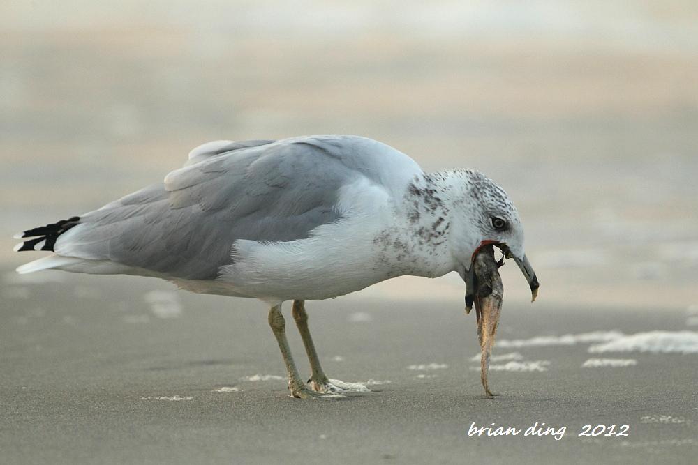 海鸥的早餐_图1-2
