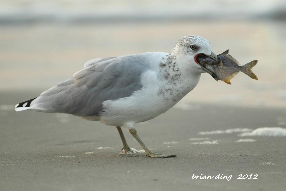 海鸥的早餐_图1-3