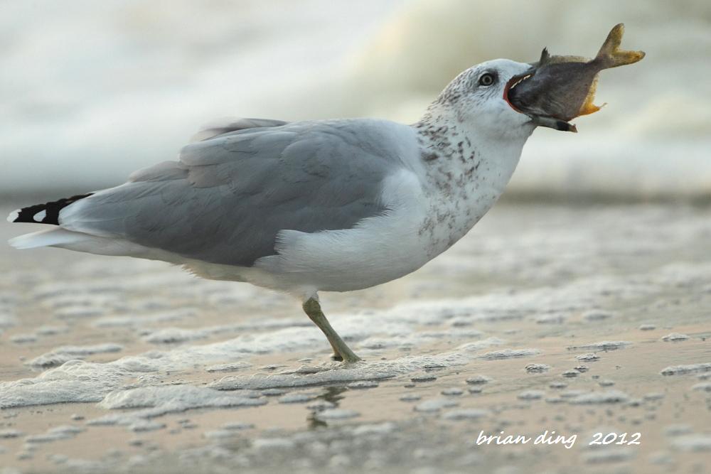 海鸥的早餐_图1-4