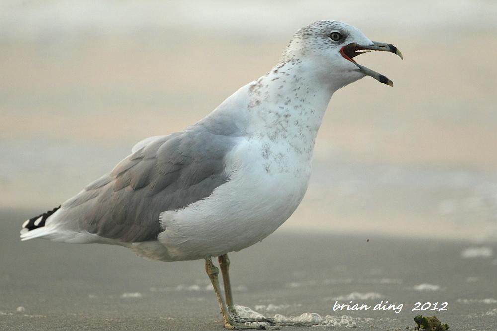 海鸥的早餐_图1-7