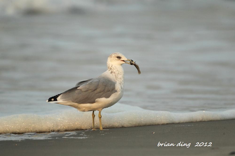 海鸥的早餐_图1-8