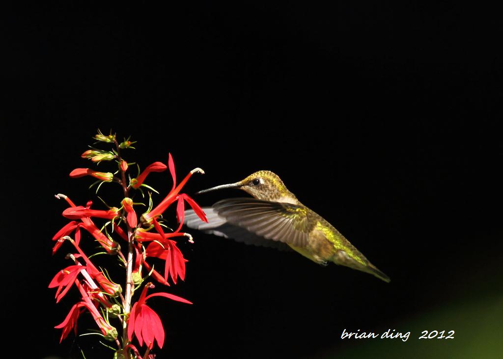 蜂鸟2012_图1-6