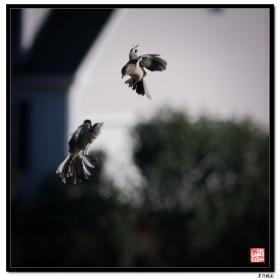 【心想事成】空中的飞鸟