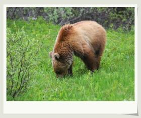 【小虫摄影】路边的熊