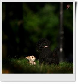 【风之影】很萌的小狗