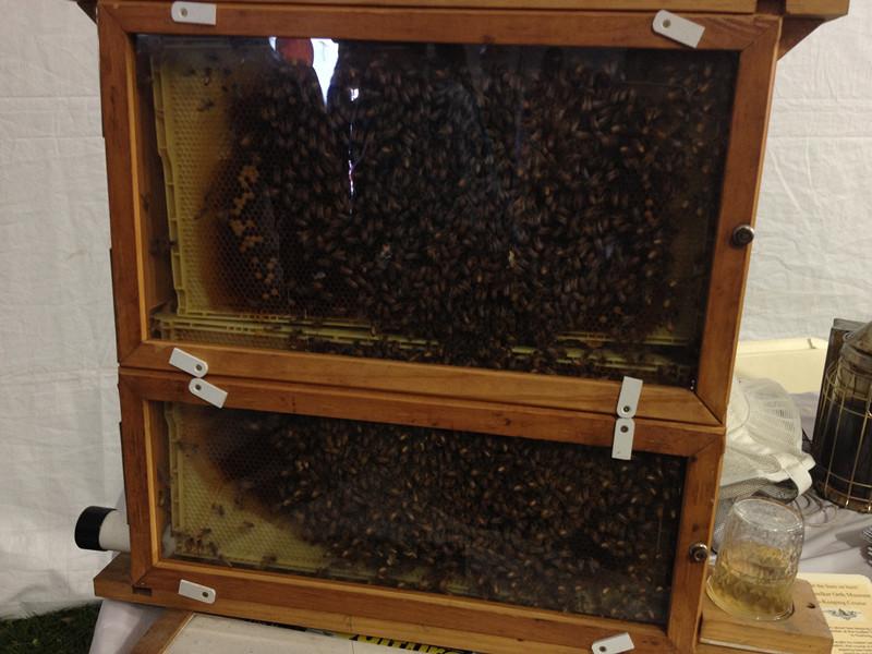 蜜蜂箱,旁边还有他们自制的蜂蜜可以购买