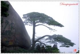 安徽黄山迎客松风景