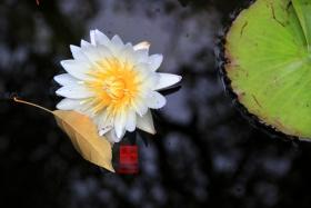 【攝影蟲】秋色2012