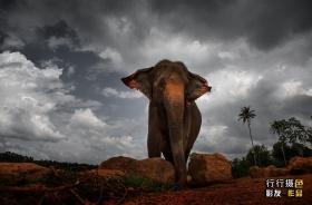 微笑的国家,斯里兰卡摄影之旅!