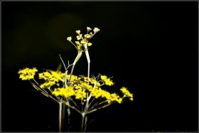 【star8攝影】初秋的小花小草