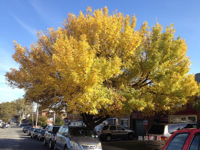 秋树,一棵也灿烂_图1-1