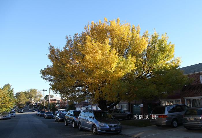 秋树,一棵也灿烂_图1-4