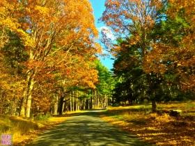 纽约Ward Pound Ridge的秋色毫不逊色!
