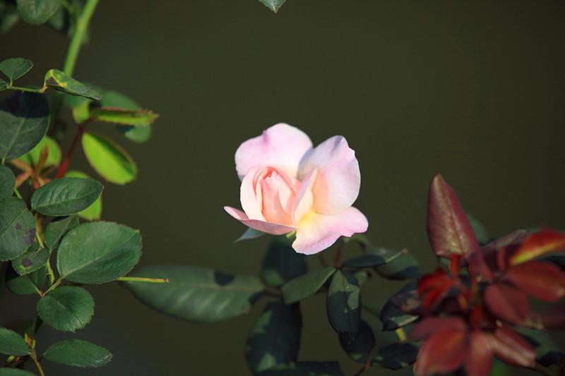 湖边花絮_图1-8