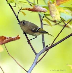 公园里飞来飞去的小鸟着实可爱,拍了几张与