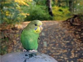 【相机人生】带着鸟儿逛公园(