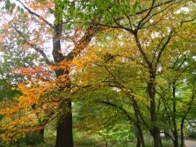 中央公园的秋天