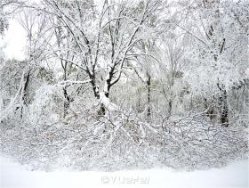 【相机人生】飓风过后降秋雪(361)