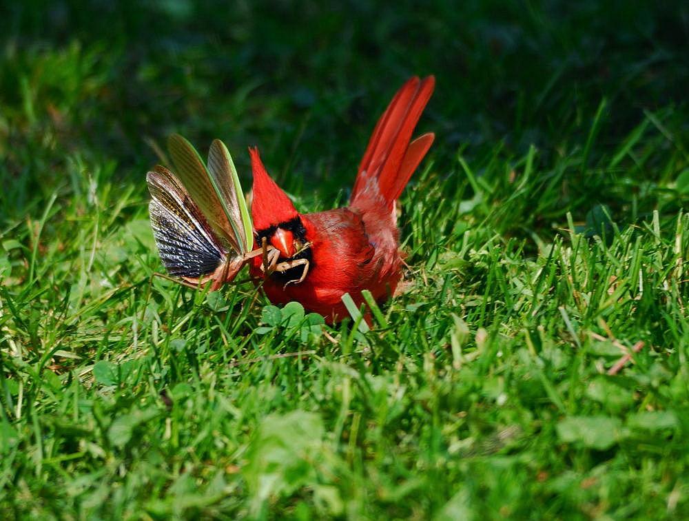 打了一些鸟,汇报演出_图1-22