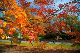 纽约市中央公园 -- 又一秋景