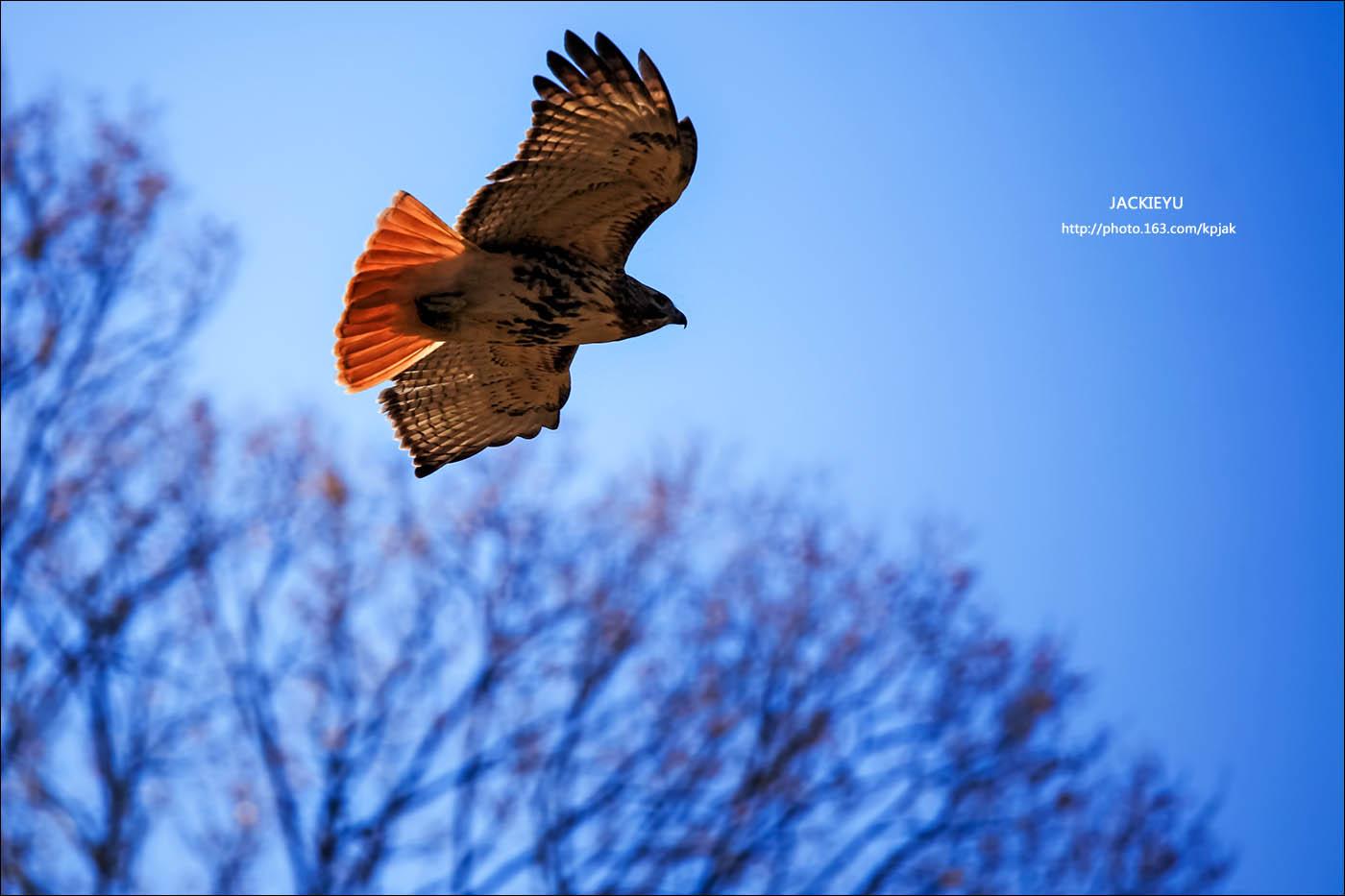 幾張鳥片_图1-1