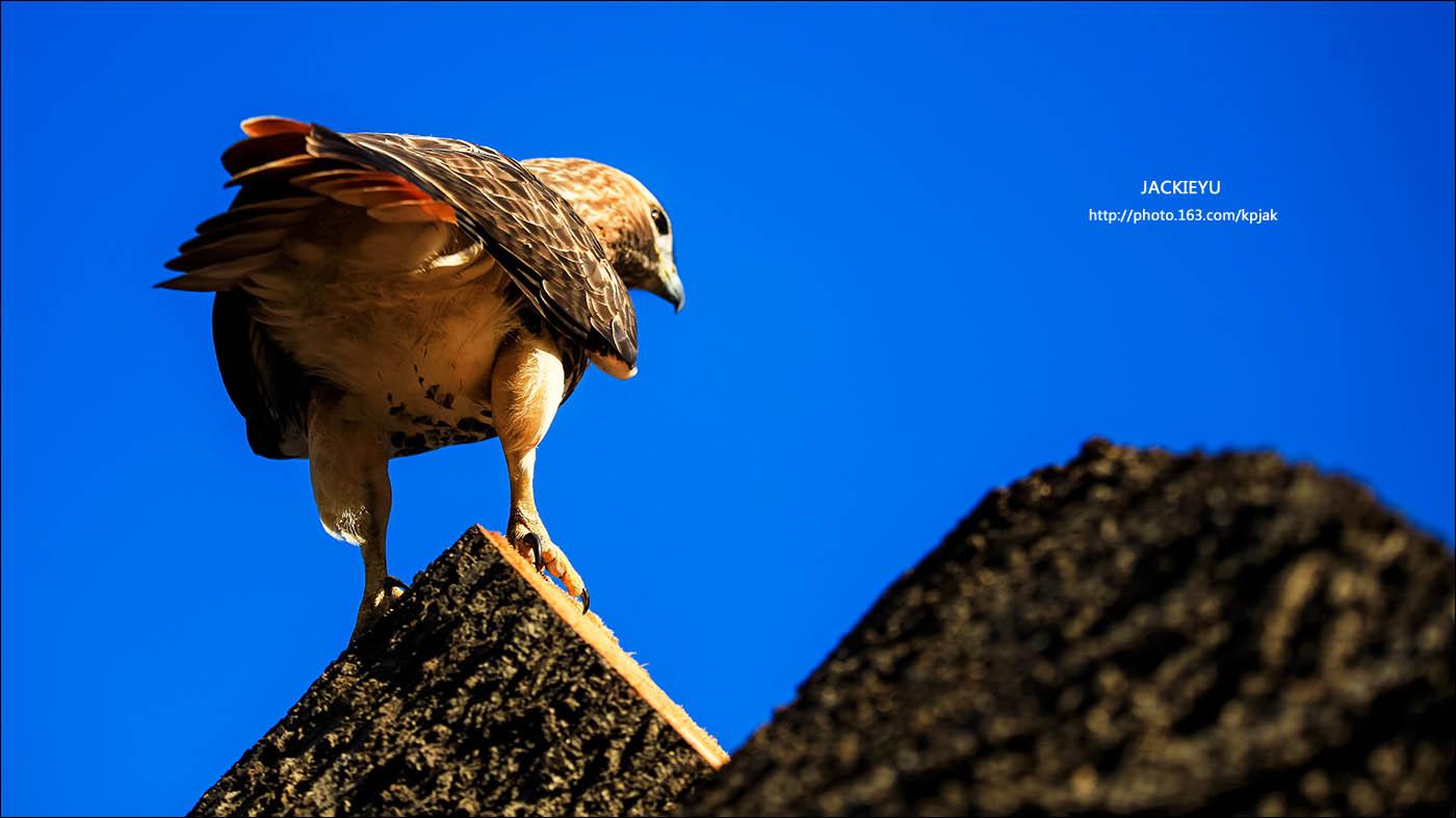 幾張鳥片_图1-2