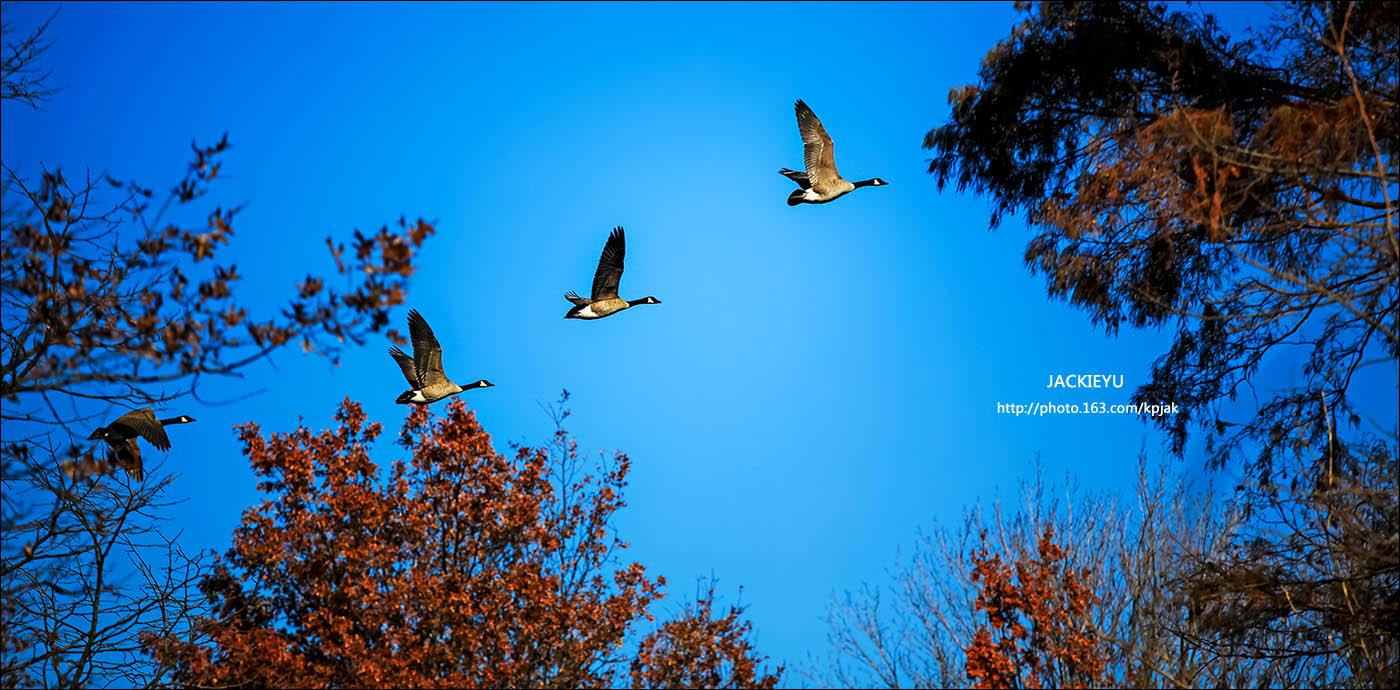 幾張鳥片_图1-3
