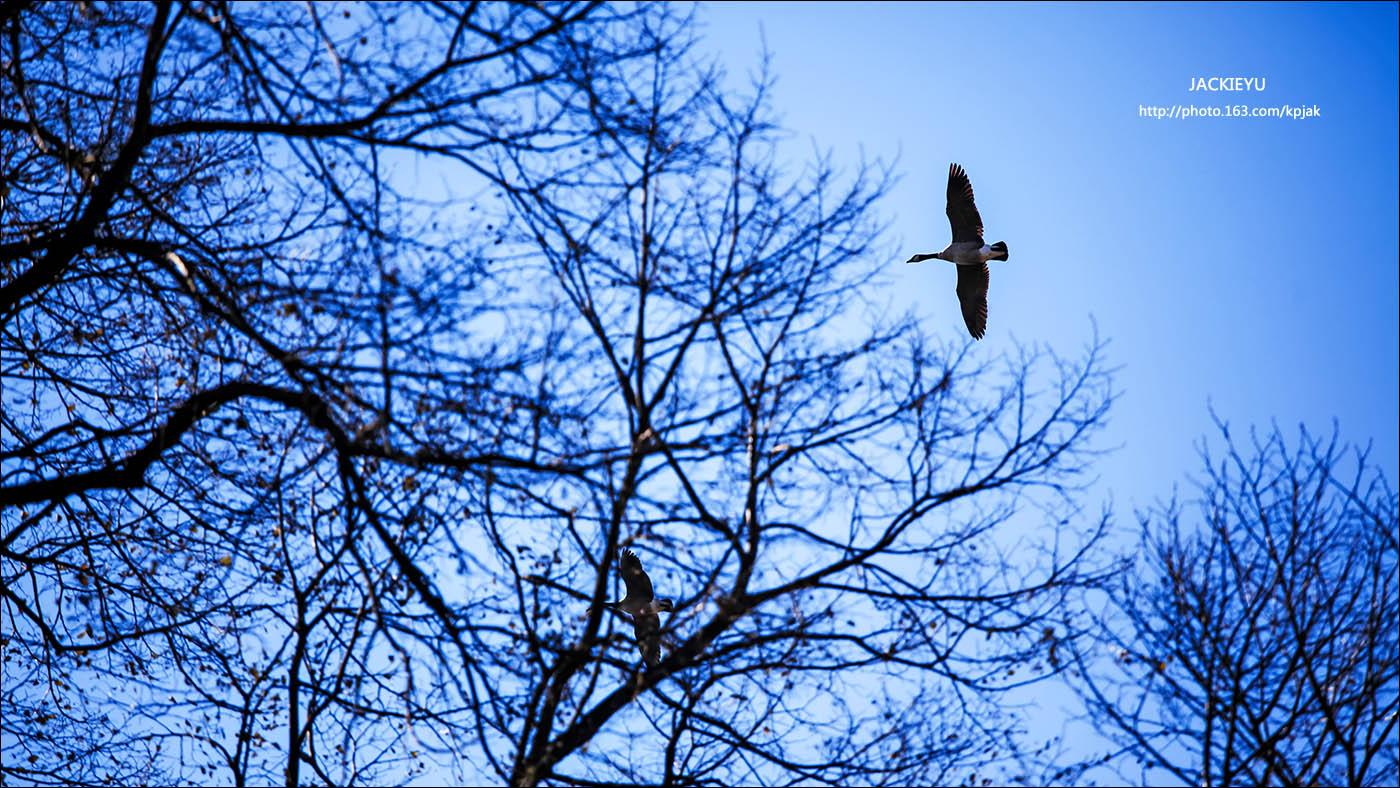 幾張鳥片_图1-4