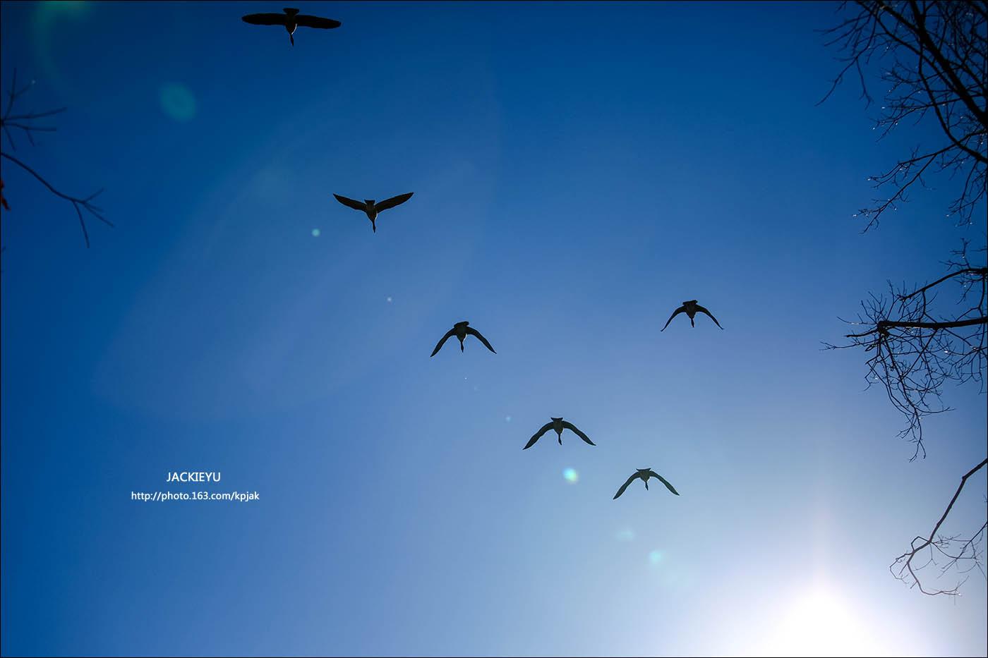 幾張鳥片_图1-5