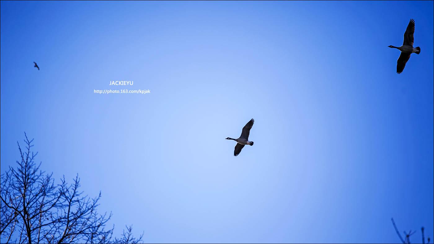 幾張鳥片_图1-6
