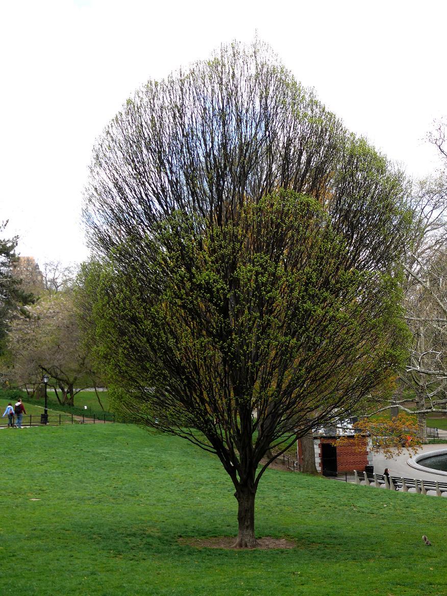 微信树木自然风景头像风景图片