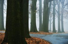 走-拍  今儿早晨的雾