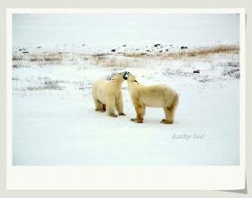 【小虫摄影】看北极