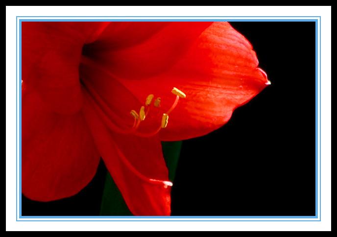 """娇艳迷人、深沉、庄重之美的""""对红花""""_图1-6"""