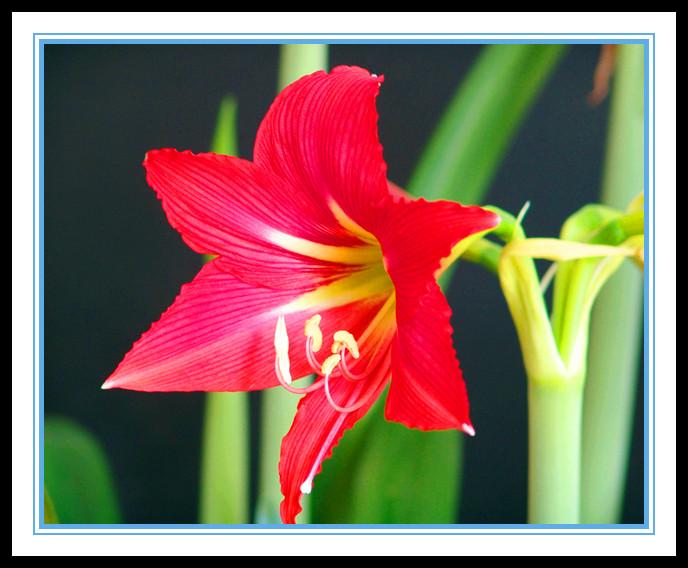 """娇艳迷人、深沉、庄重之美的""""对红花""""_图1-10"""