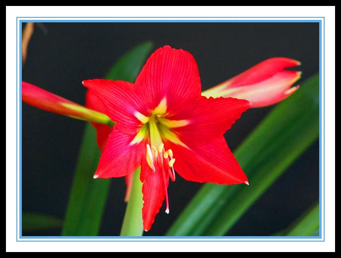 """娇艳迷人、深沉、庄重之美的""""对红花""""_图1-9"""
