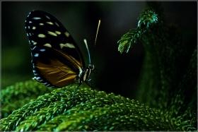 【star8攝影】博物館室内蝴蝶