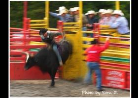 牛仔竞技秀 之 二:出闸-疯狂的开此。