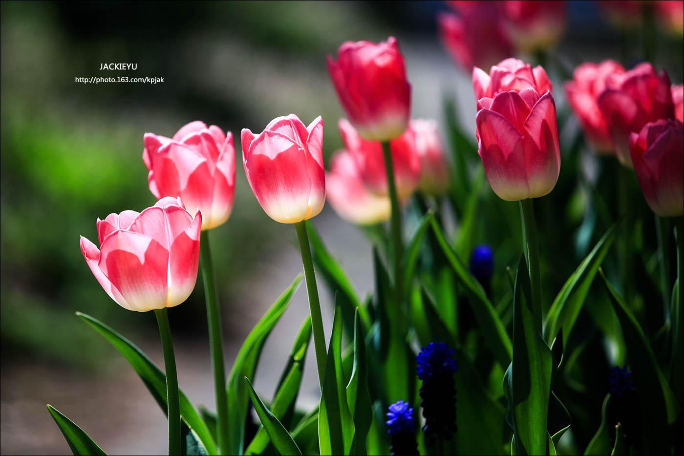 懷(念)春(天)_图1-3