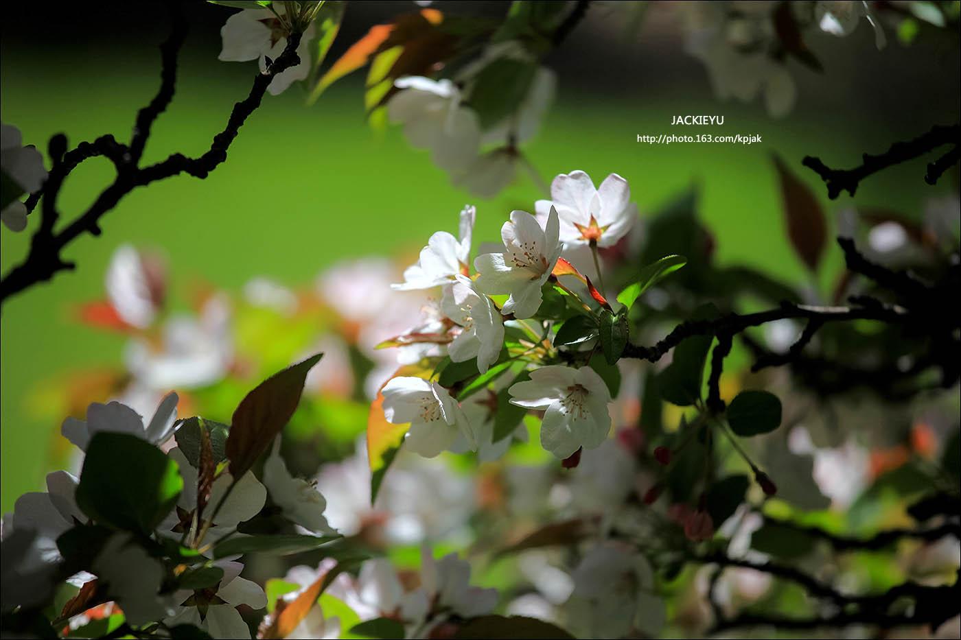 懷(念)春(天)_图1-1