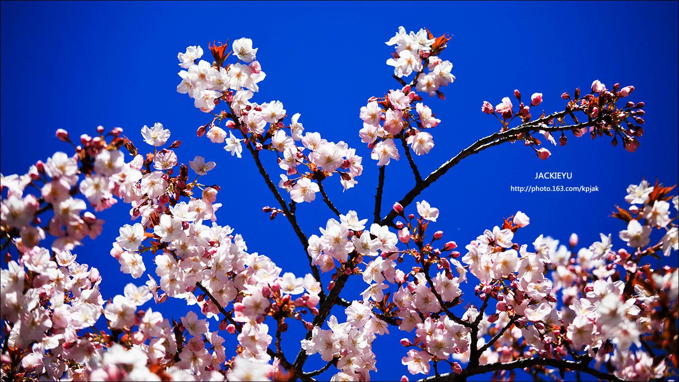 懷(念)春(天)_图1-5