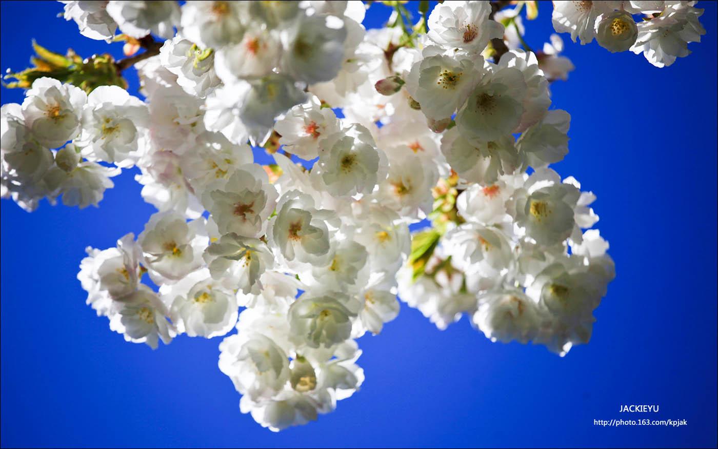 懷(念)春(天)_图1-6