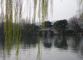早春西湖的柳景