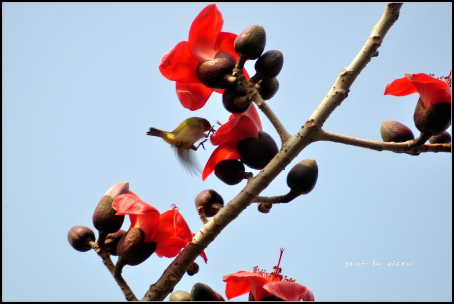 红棉与小鸟_图1-2