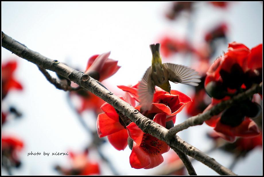 红棉与小鸟_图1-16