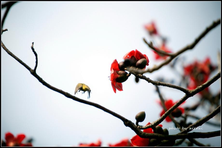 红棉与小鸟_图1-19