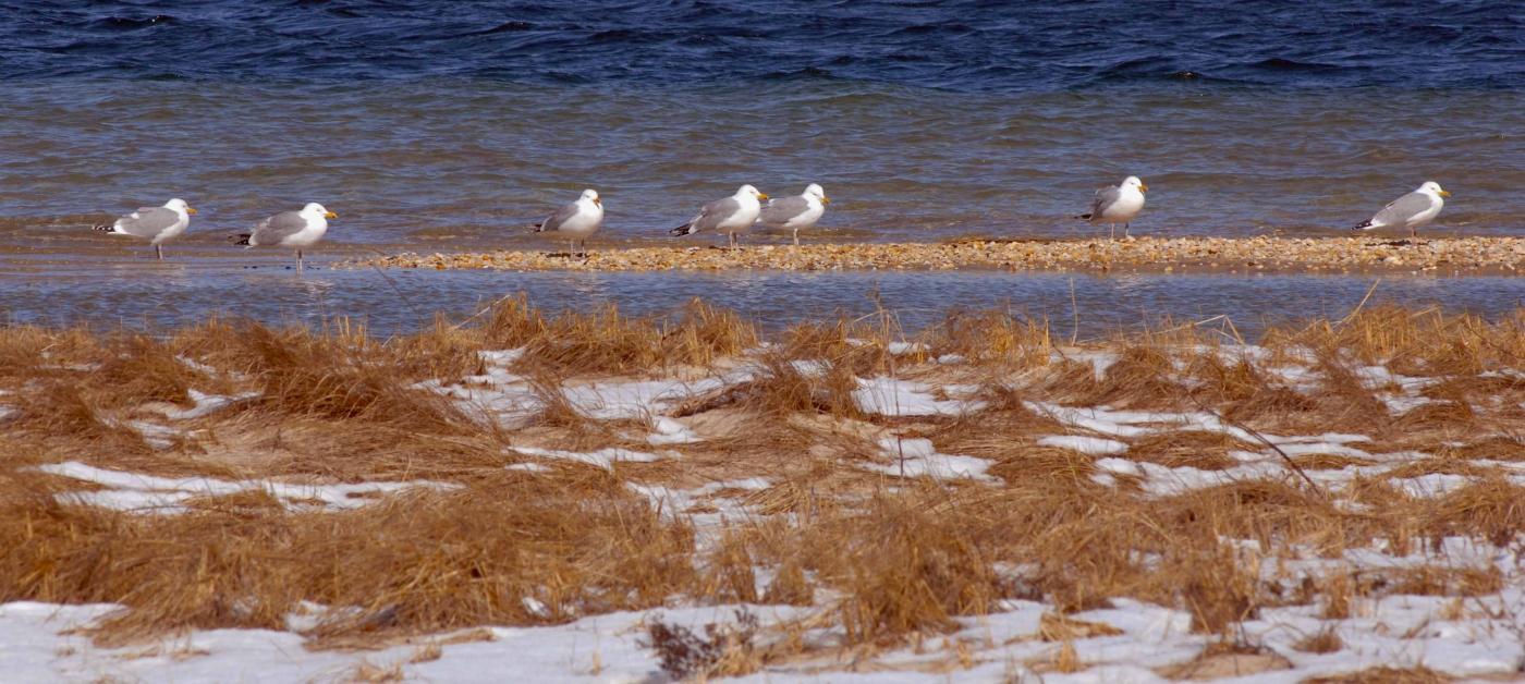 【圖博】春雪後的長島北福克North Fork_图1-3
