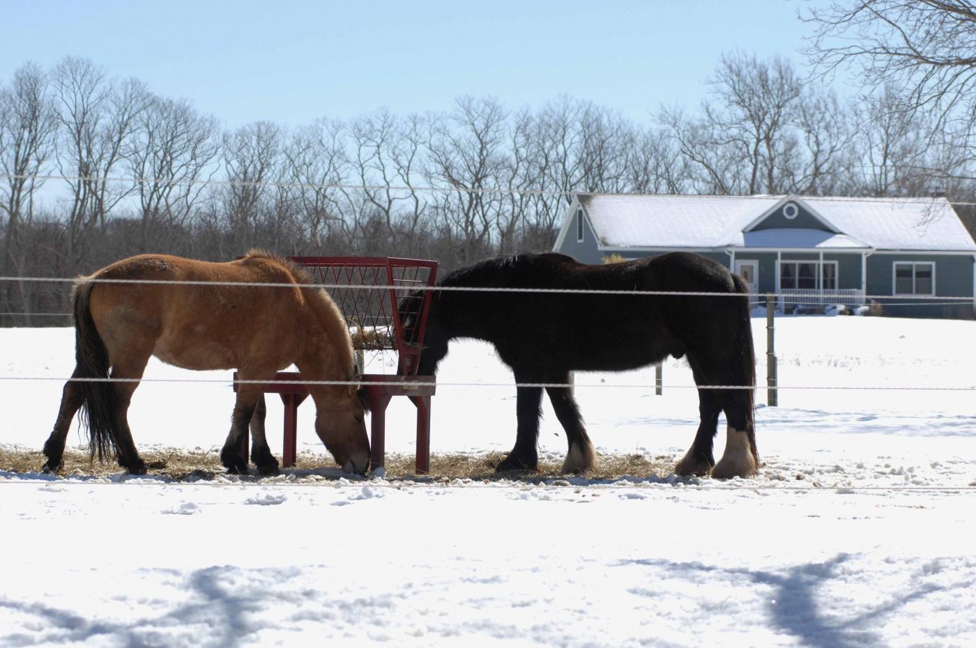 【圖博】春雪後的長島北福克North Fork_图1-1